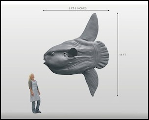 Sunfish maquette scale drawing