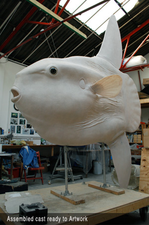 Sunfish cast copy
